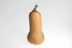 Courge Butternut (L'Echo Potager)